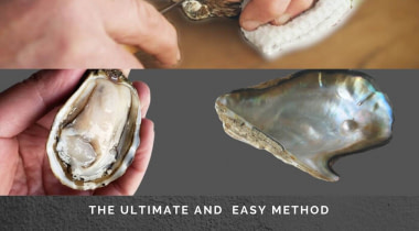 How to Open an Oyster Shell-In Easy Way!